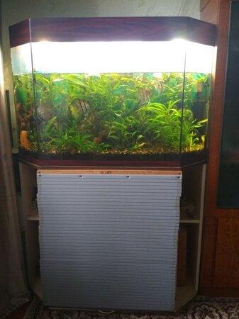 Аквариум+ тумба+ рыбки+ растения - Прилуки, Черниговская область